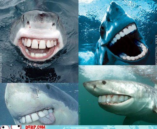 best of week derp jaws shark teeth - 5742233856