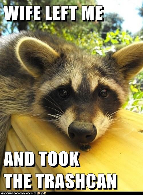 animals divorce raccoon - 5743104768