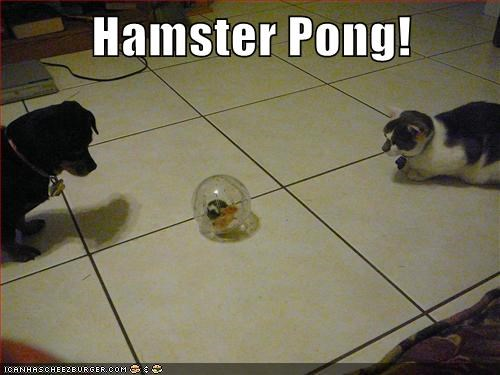 ball caption captioned cat dogs game hamster pong - 5743107584