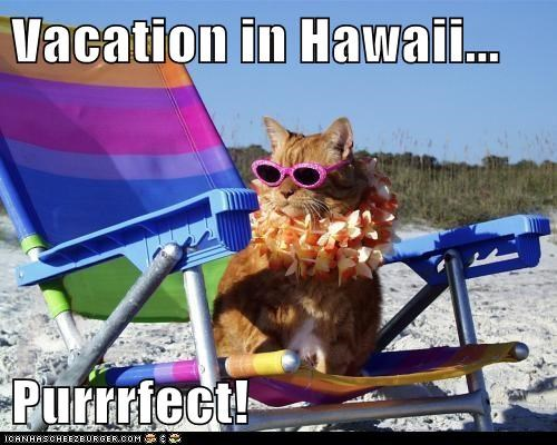 Vacation in Hawaii...  Purrrfect!