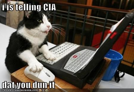 animals cat cia computer guilty I Can Has Cheezburger you did it - 5743437056