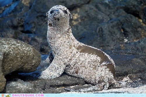 baby bath covered dirty Hall of Fame need sand sea lion squee spree - 5743466240