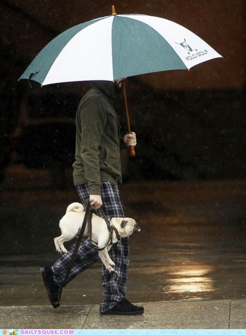 acting like animals carrying do not want dogs Hall of Fame lazy pug rain sling stubborn weather - 5743475968