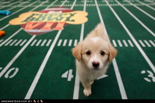 around the interwebs football Puppy Bowl sports super bowl the fw - 5743520512