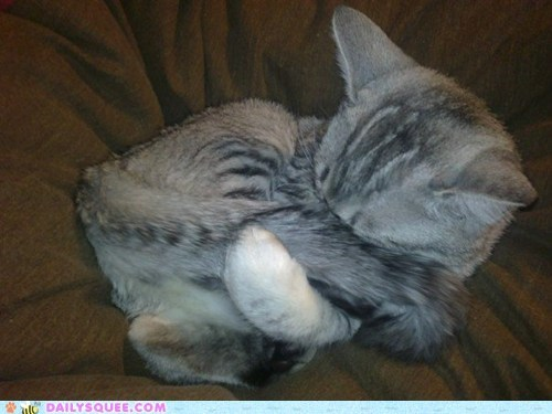 baby cat do not want Hall of Fame kitten reader squees sleeping waking up - 5743612928