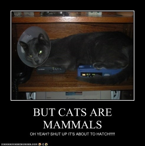 BUT CATS ARE MAMMALS OH YEAH? SHUT UP IT'S ABOUT TO HATCH!!!!!
