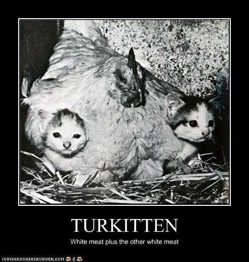 adorable animals Cats chicken kitten - 5743714816