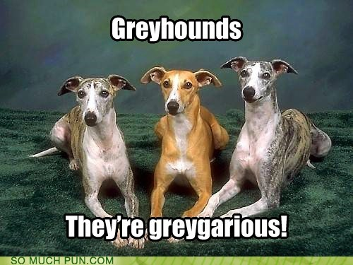 gregarious grey greyhounds prefix similar sounding - 5744508416