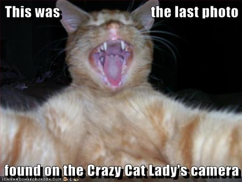 camera caption captioned cat crazy found lady last ominous Photo - 5744567808