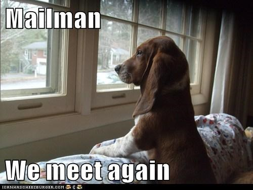 basset hound,mailman,we meet again,window