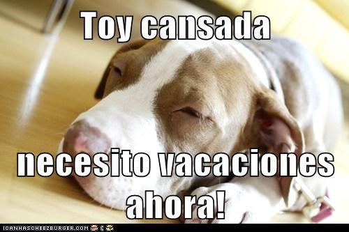Toy Cansada Necesito Vacaciones Ahora I Has A Hotdog Dog