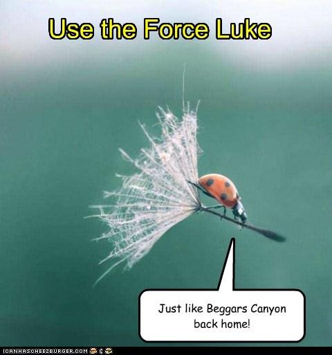Use the Force Luke Just like Beggars Canyon back home!