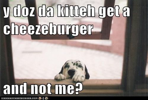 Cheezburger Image 5746356480