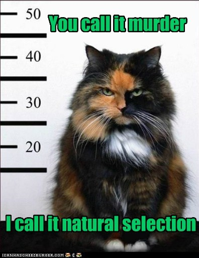animals cat evolution I Can Has Cheezburger murder natural selection - 5746774528