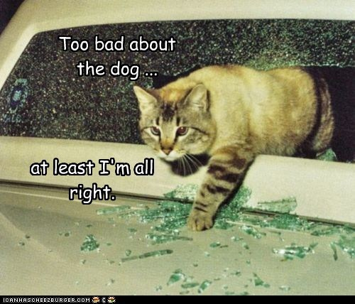 accident,caption,captioned,car,cat,crash,dogs,Okay,too bad,upside