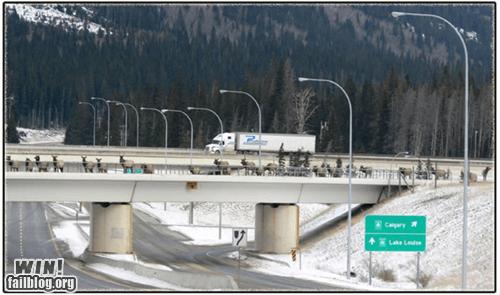 animals Canada freeway highway moose - 5747416064