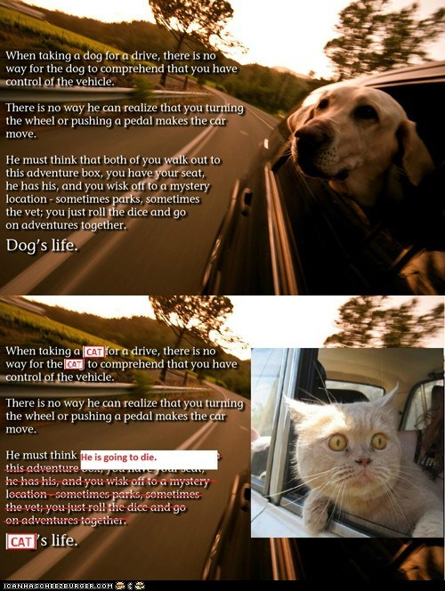 adventures,cars,differences,dogs,driving,goggies,life,perspective,scared