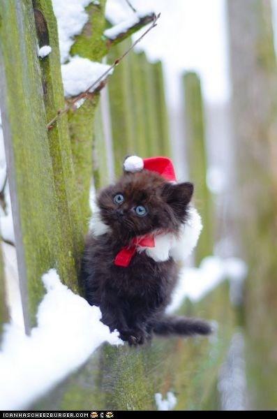 christmas cyoot kitteh of teh day hats holidays Sad santa hats snow - 5747602944