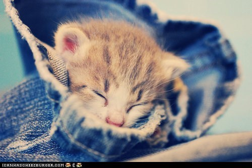 cyoot kitteh of teh day denim jeans sleeping tiny - 5747605504