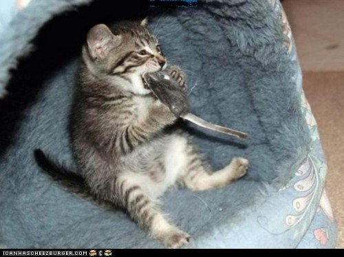 cyoot kitteh of teh day eating human-like mice mouth open sitting toy mice toys - 5747616512