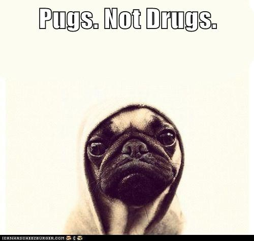 caption clothes clothing dogs drugs goggies hoodie hoods pug pugs pugs not drugs - 5748308224