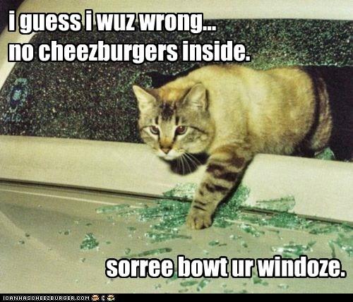 Cheezburger Image 5748589312
