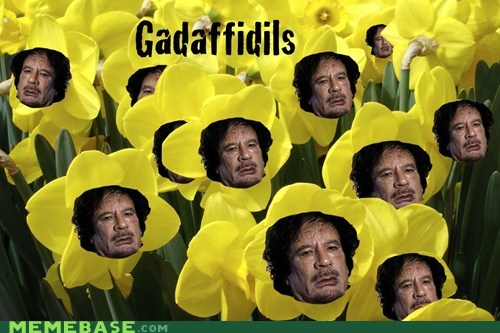 daffadils gadaffi Memes - 5748672000