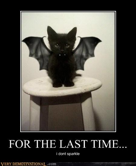 cat hilarious Sparkle twilight vampire - 5748863488