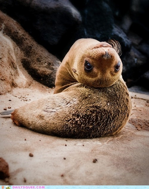 baby contorted contortion sea lion squee spree Staring upside down - 5748891136