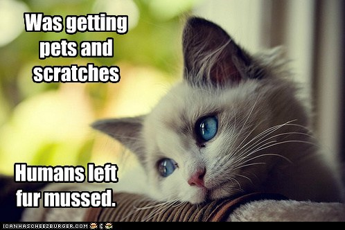 complaining first world cat problems First World Problems fur hair Hall of Fame humans petting Sad whining - 5749224192