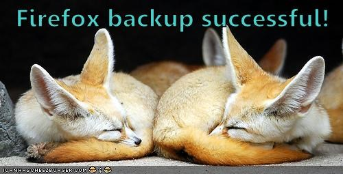 animals best of the week fennec fox firefox firefox update Hall of Fame - 5749352192