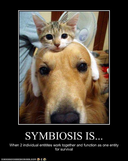 cat friends golden retreiver kitten Symbiosis team work work together - 5749642496