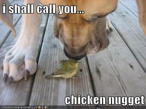 bird,chicken nugget,friends,interspecies friendship,love,smell,sniff,whatbreed