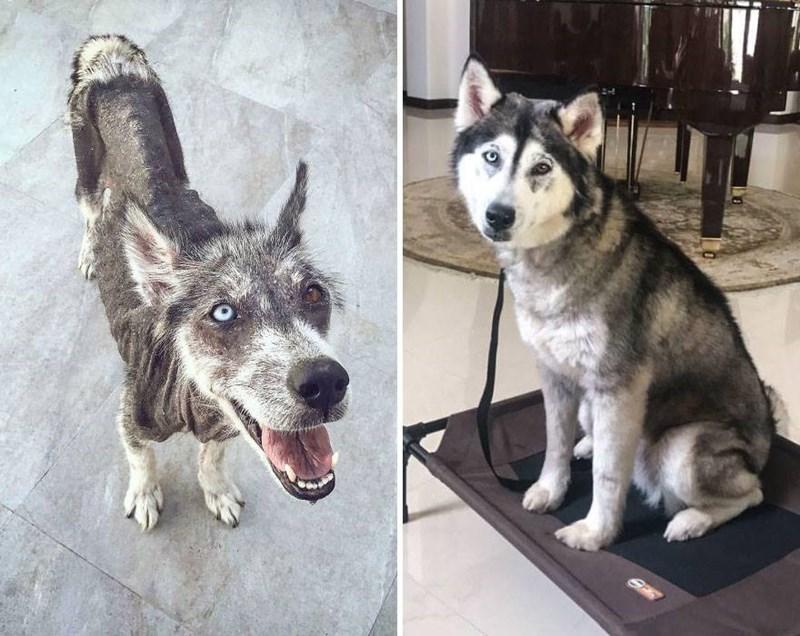 galeria perros salvados