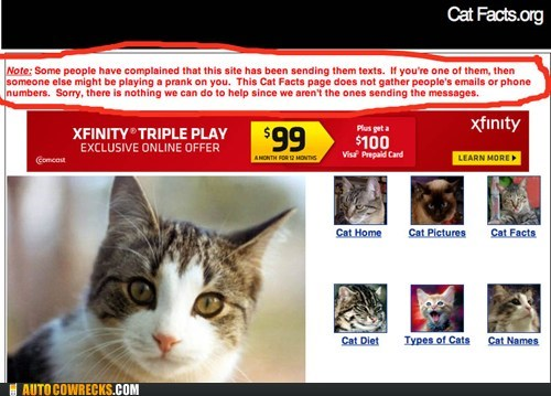 cat facts prank prank phone call troll trolling website - 5750860544
