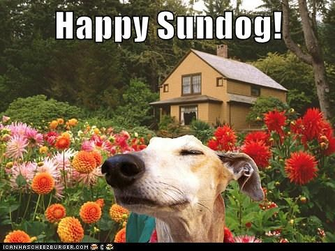 flowers greyhound happy dog smiling stop to smell the flowers Sundog - 5751064064