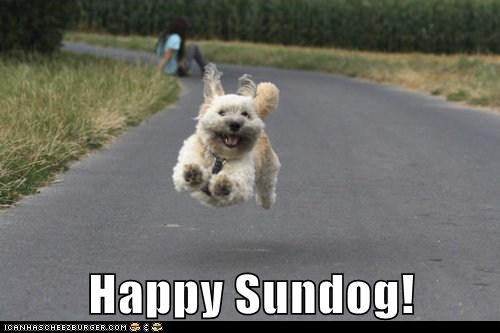 excited happy dog happy sundog hoverdog jump jumping running smiling SO HAPPY stoked Sundog whatbreed - 5751132160