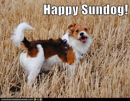 awesome happy dog happy sundog jack russell terrier mixed breed outdoors smiling Sundog - 5751145984