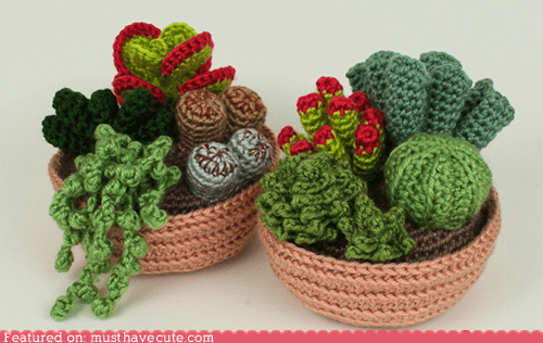 Amigurumi cactus craft Crocheted DIY pattern succulents - 5751399936