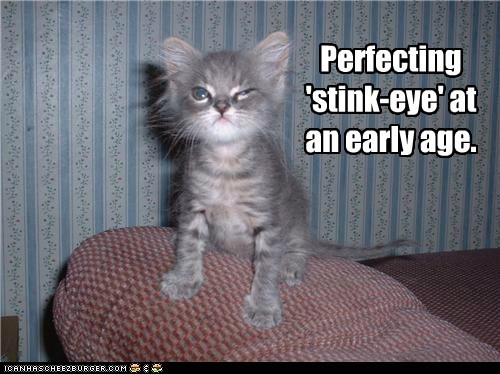 age,best of the week,caption,captioned,cat,early,eye,Hall of Fame,kitten,perfect,perfecting,practice,stink,stink eye
