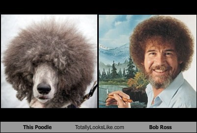 bob ross dogs funny Hall of Fame poodle TLL - 5752453120