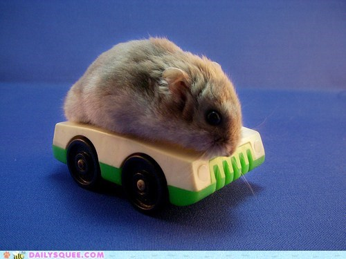 acting like animals,car,dwarf hamster,hamster,riding,tiny,toy