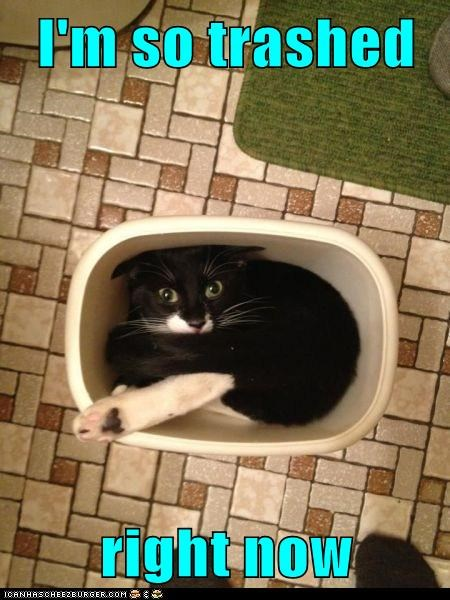 best of the week,caption,captioned,cat,now,pun,right,so,stuck,trash can,trashed