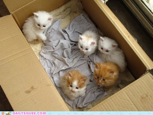 adage Babies baby box cat Cats Hall of Fame kitten package - 5752811264