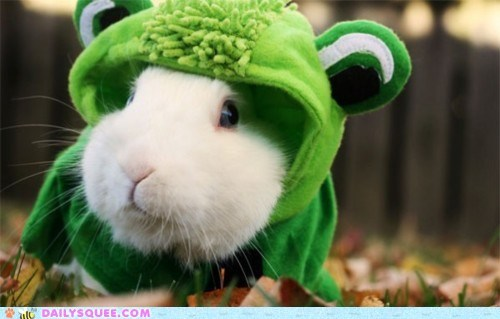 acting like animals bunny confused costume dressed up Hall of Fame happy bunday rabbit where