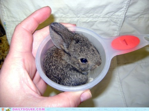 baby bunny cup daily dose Hall of Fame happy bunday rabbit - 5752851712