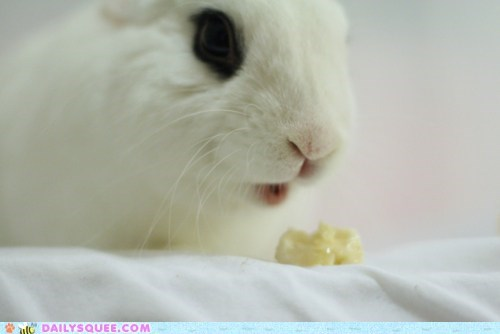 banana bunny do want happy bunday more nomming noms potassium rabbit - 5752858112
