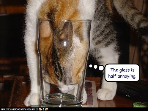 annoying,caption,captioned,cat,drinking,glass,half,stuck,water