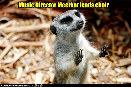 animals meerkat Music musical director - 5753858816
