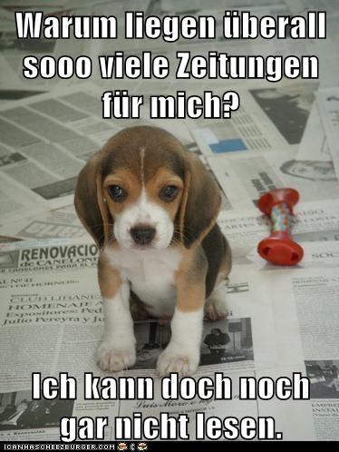 Cheezburger Image 5753917952